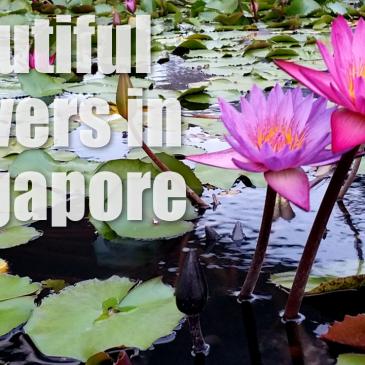 Beautiful Flowers Singapore